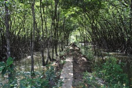 Hutan Payau Cilacap Jalanjalankita Wisata Mangrove Kab