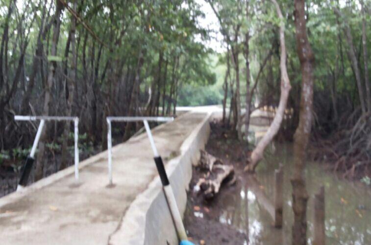 Hutan Payau Cilacap Mulai Berbenah Oleh Syasya Mam Kompasiana Biar