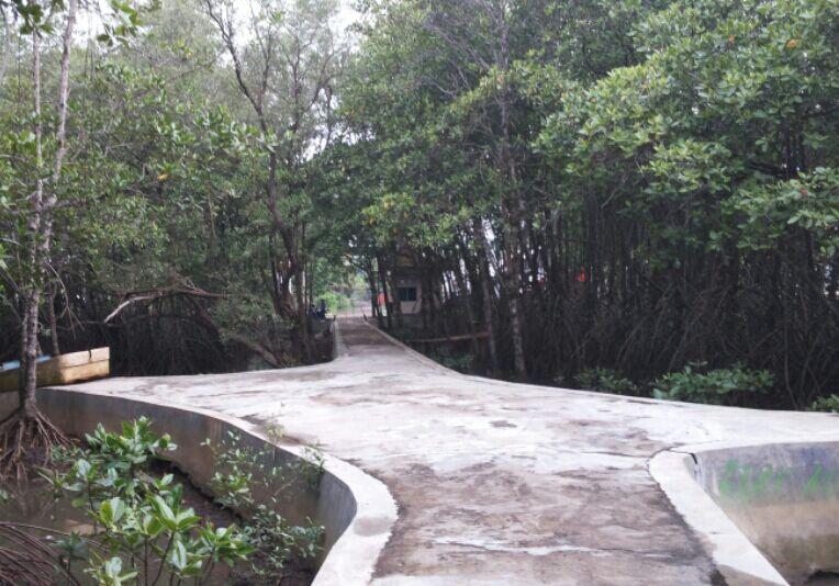 Hutan Payau Cilacap Mulai Berbenah Oleh Syasya Mam Kompasiana Jalanan