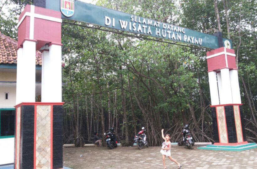Hutan Payau Cilacap Mulai Berbenah Oleh Syasya Mam Kompasiana Wisata