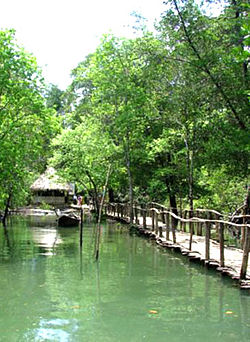 Hutan Payau Cilacap Wikipedia Bahasa Indonesia Ensiklopedia Bebas Wisata Mangrove