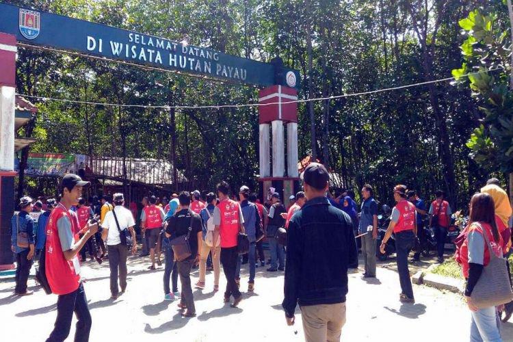 Jawa Tengah Merdeka Kaya Eksotis Hutan Mangrove Wisata Huta Payau