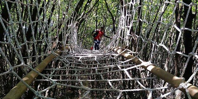 Jawa Tengah Merdeka Kaya Eksotis Hutan Mangrove Wisata Payau Cilacap