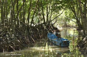 Mengikuti Tren Wisatawan Hutan Payau Cilacap Bersolek Suasana Sejuk Tengah