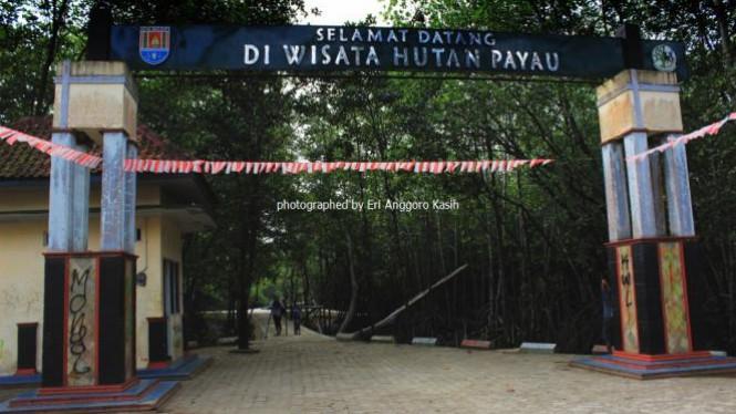 Menikmati Ekosistem Mangrove Wisata Hutan Payau Cilacap Viva Photo Report
