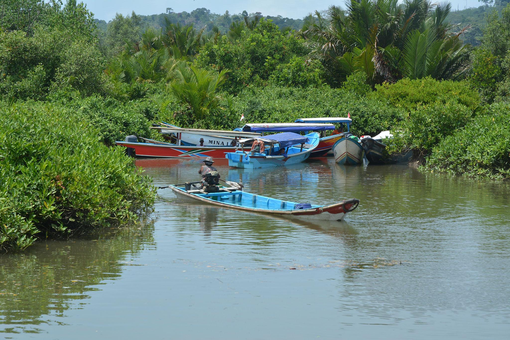 Obyek Wisata Kampung Laut Cilacap Jawa Tengah Hutan Payau Mangrove