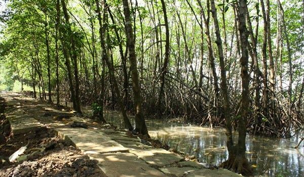 Payau Jpg Hutan Wisata Mangrove Kab Cilacap