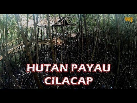 Penampakan Wisata Hutan Payau Cilacap 2018 Silahkan Komentar Mangrove Kab