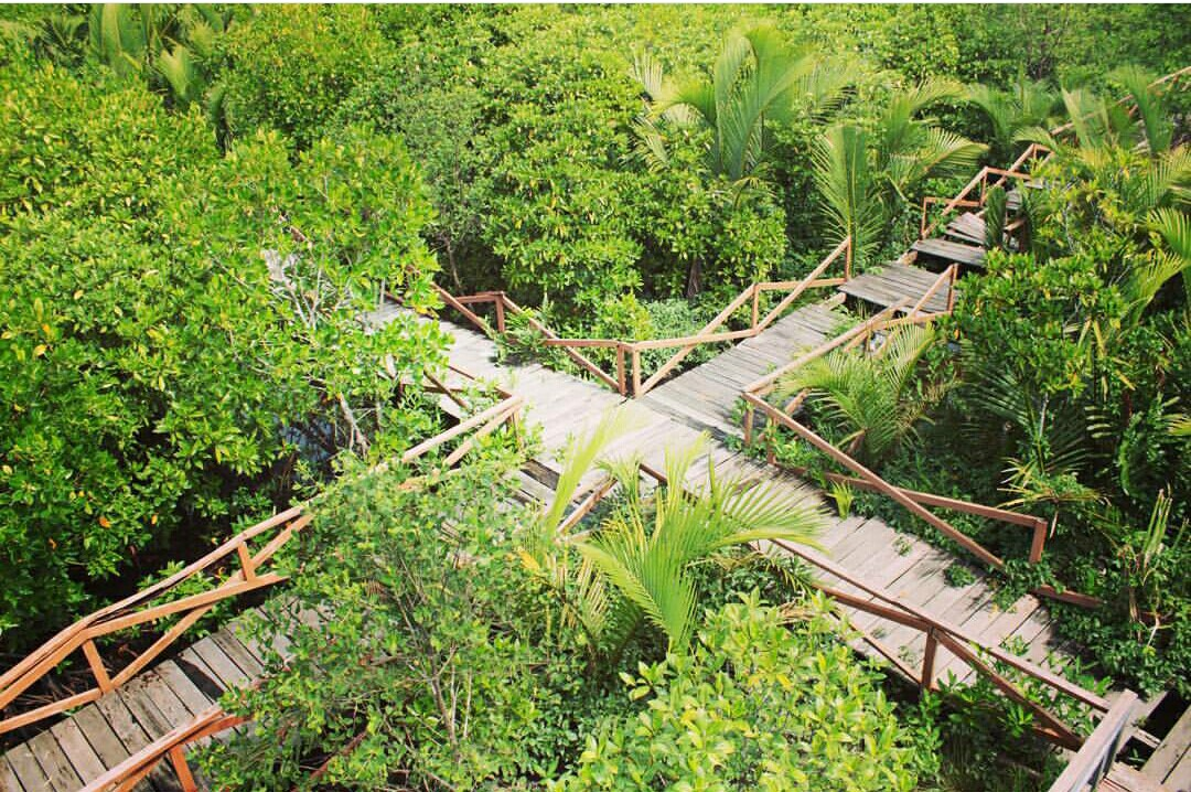 Penggunungan Alam Sekitar Cilacapku Hasil Gambar Hutan Payau Mangrove Cilacap