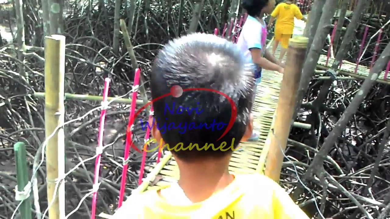 Pesona Wisata Hutan Payau Cilacap Main Bola Youtube Mangrove Kab