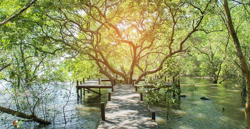 Potensi Ekowisata Hutan Mangrove Kabupaten Cilacap Jawa Tengah Illustrasi Wisata