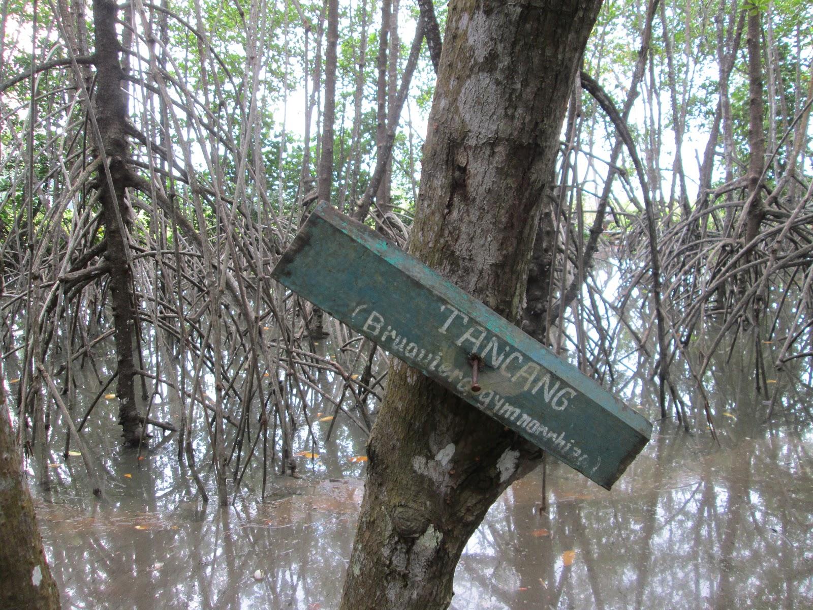Visit Indonesia History Hutan Payau Tritih Cilacap Terdapat Mangrove Asosiasi