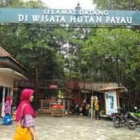 Wisata Hutan Payau Jalan Tritih Kulon Foto Diambil Oleh Dias