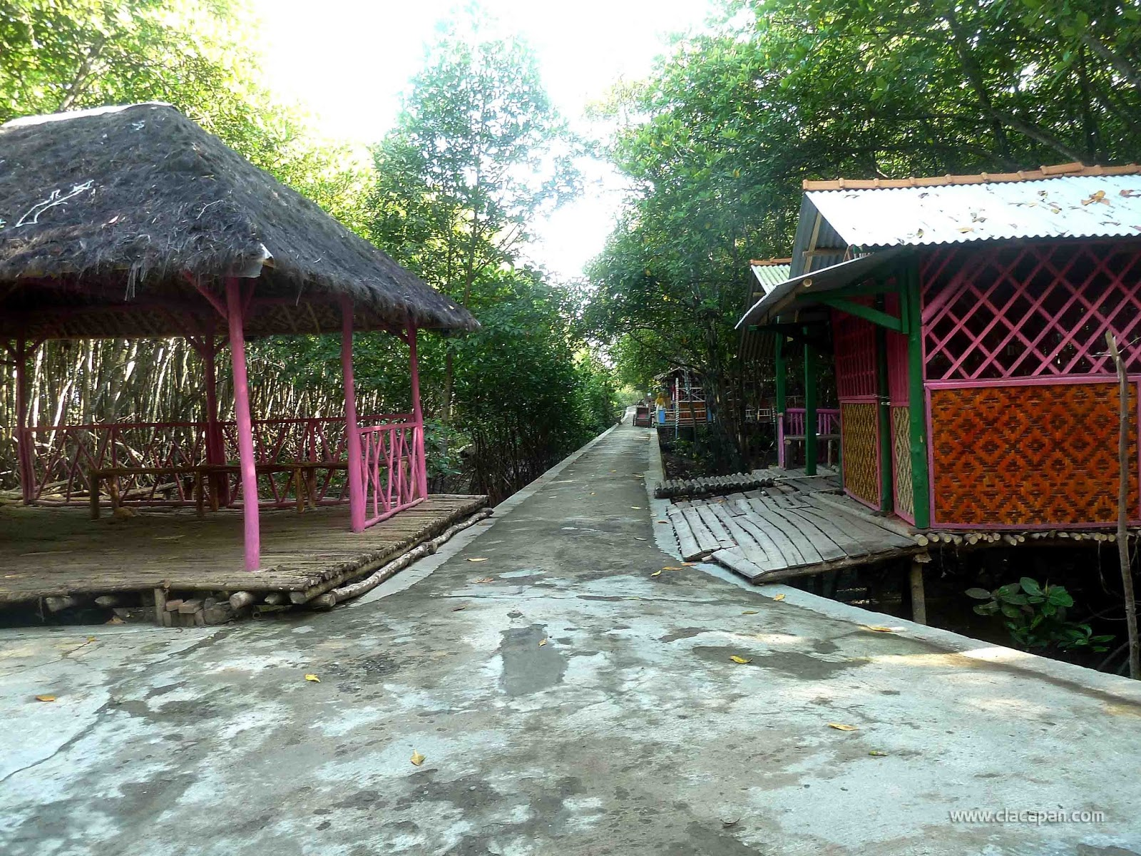 Wisata Hutan Payau Keindahannya Hampir Terlupakan Yuk Jalan Utama Area