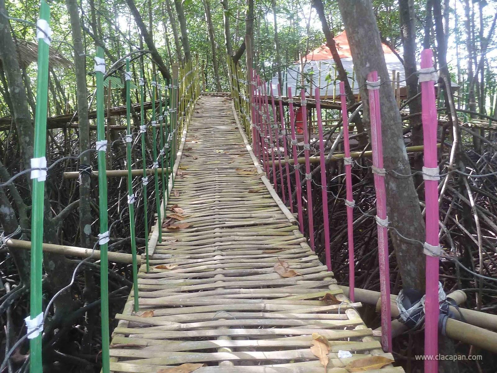 Wisata Hutan Payau Keindahannya Hampir Terlupakan Yuk Jembatan Penghubung Gazebo