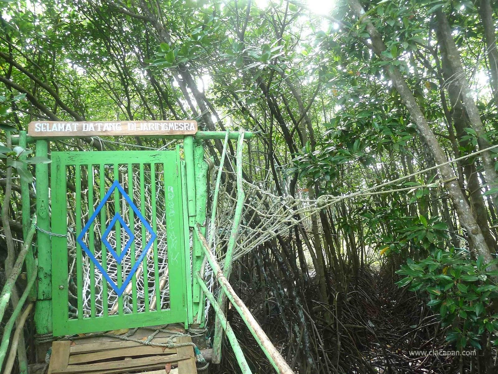 Wisata Hutan Payau Keindahannya Hampir Terlupakan Yuk Wahana Jaring Mesra