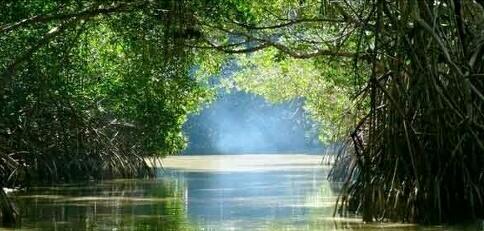 Wisata Hutan Payau Wonderful Cilacap Mendapat Suplai Air Sungai Lester
