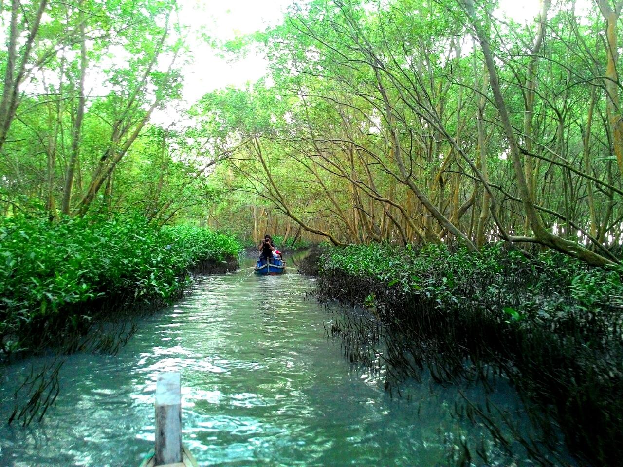 Wisata Mangrove Page 2 Lampung Center Marga Sari Timur Hutan