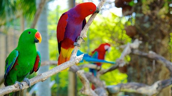 15 Tempat Wisata Gianyar Bali Murah Gratis Wajib Dikunjungi Bird