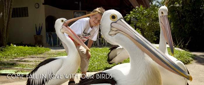 32 Tempat Wisata Terkenal Bali Ramai Dikunjungi Oleh Bird Park