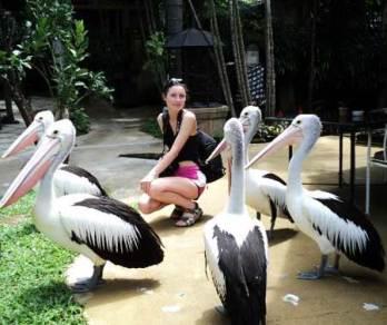 Aktifitas Bali Bird Park Seru Liburan Tempat Wisata 2015 Kab