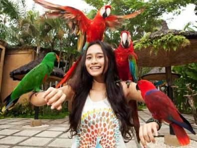 Aktifitas Bali Bird Park Seru Liburan Tempat Wisata Kab Gianyar
