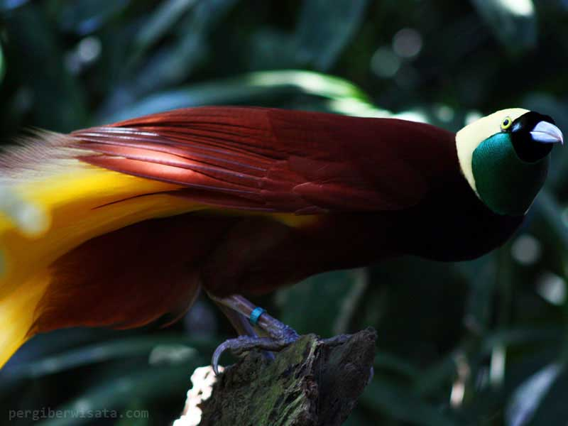 Aneka Tempat Wisata Anak Selama Bali Bird Park Kab Gianyar