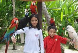 Bali Bird Park 1001wisata Hampir Kab Gianyar