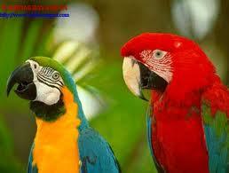 Bali Bird Park 1001wisata Tusita Kab Gianyar