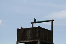 Bali Bird Park Balimap Parks 4 3472 Reviews Kab Gianyar