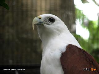 Bali Bird Park Reptile Kab Gianyar
