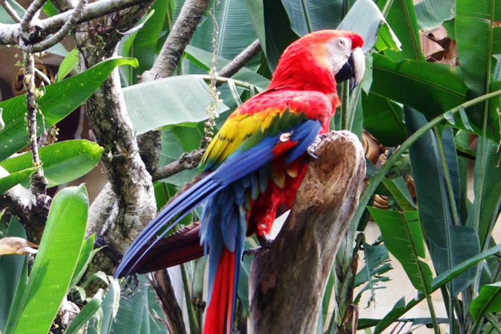 Don Antonio Blanco Museum Activities Wandering Cat Gallery Bali Bird