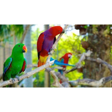 Jual Bali Bird Park Tiket Masuk Anak 2 12 Online