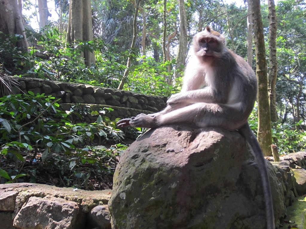 Sacred Monkey Forest Sanctuary Bali Attraction Copy David Stanley Bird