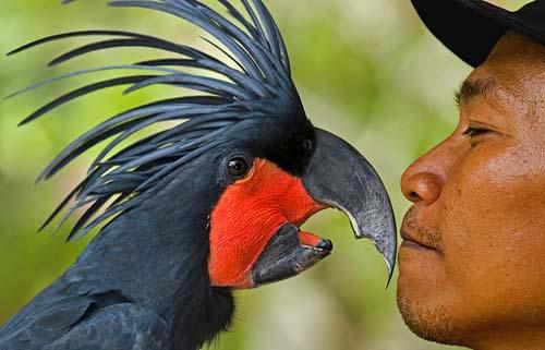 Seniku Budayaku Bali Bird Park Kab Gianyar