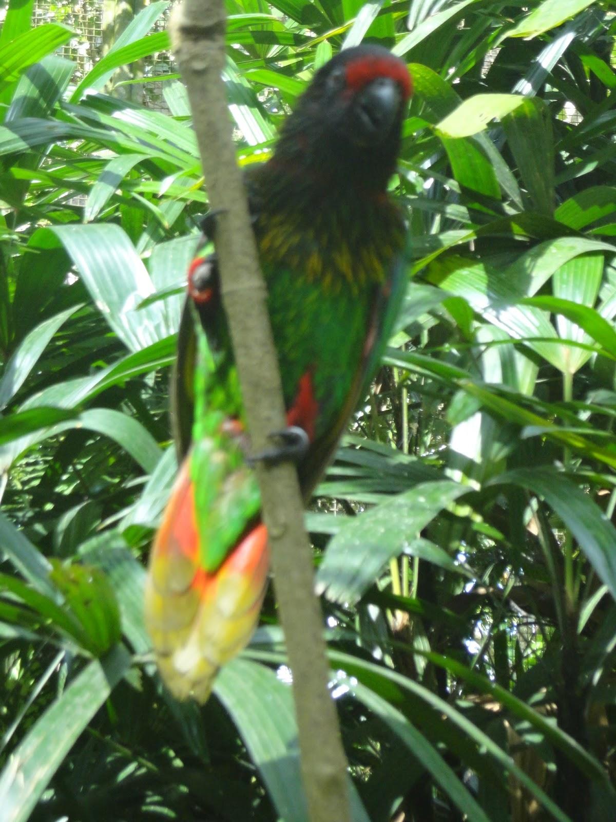 Smp Lab Undiksha Karya Wisata Bali Bird Park Burung Kakatua