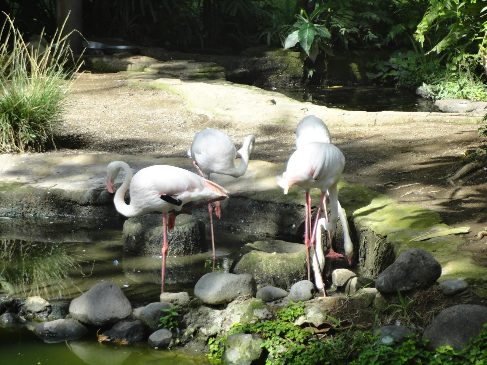 Smp Lab Undiksha Karya Wisata Bali Bird Park Jenis Burung