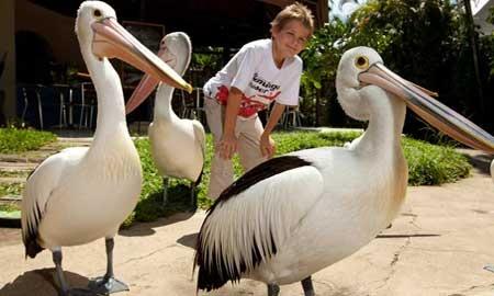 Taman Burung Bali Bird Park Dewasa Tempat Rekreasi Cocok Bagi