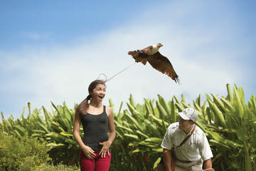 Top 10 Sukawati Art Market Gianyar Tripadvisor Bali Bird Park