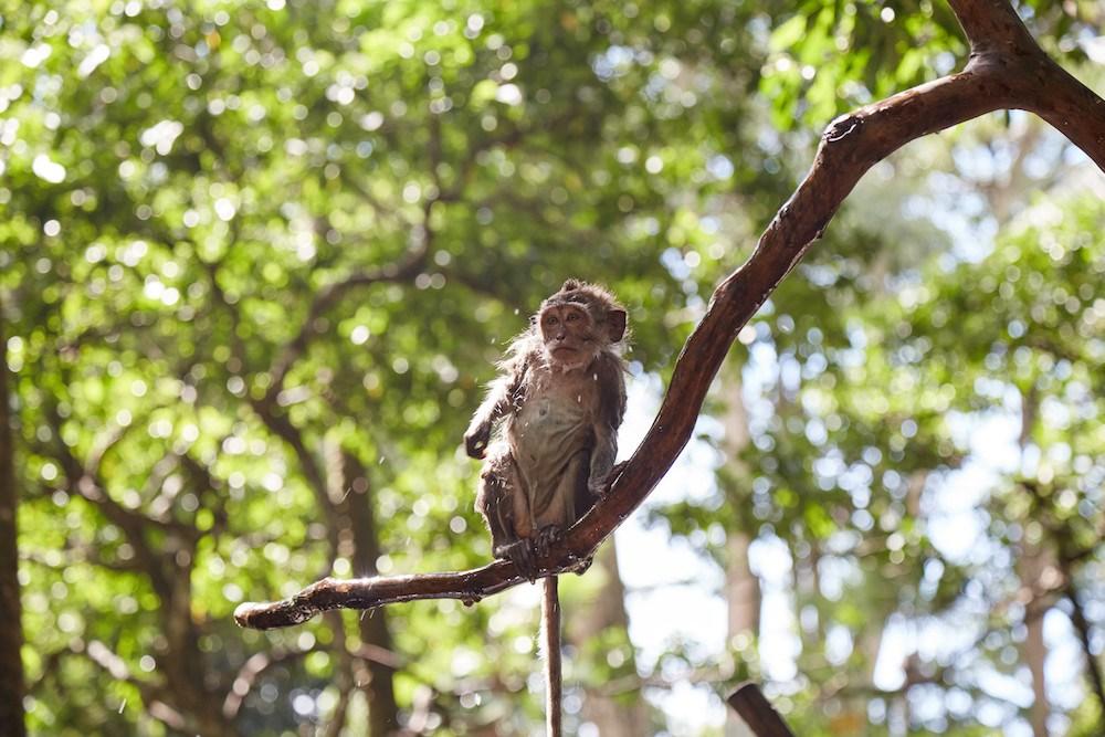 Top 5 Central Ubud Sailingstone Travel Monkey Forest Bali Bird