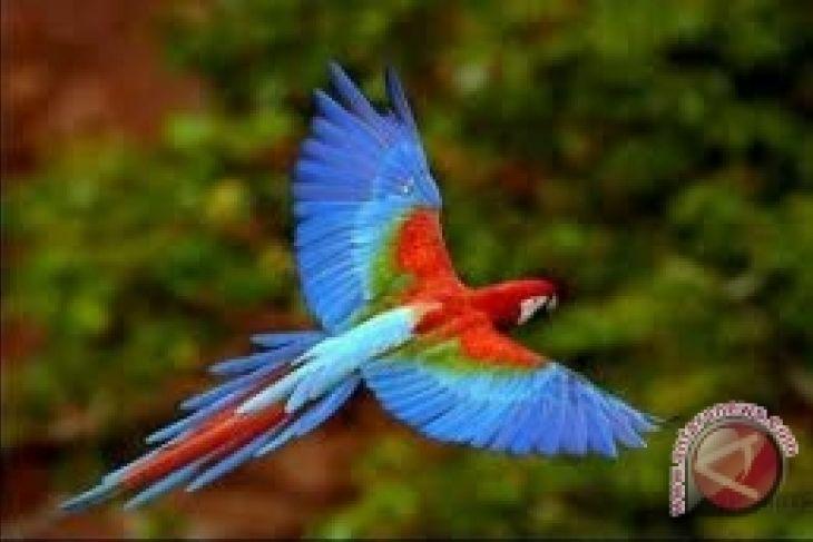 Turis Asing Kepincut Taman Burung Antara News Lampung Elang Www