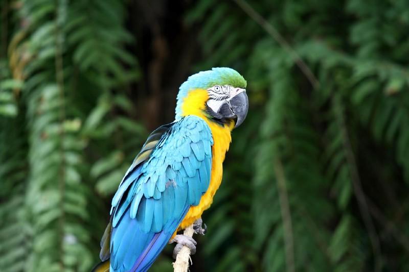 Ubud Village Bali Bird Park 1 Day Travel Itinerary Indonesia
