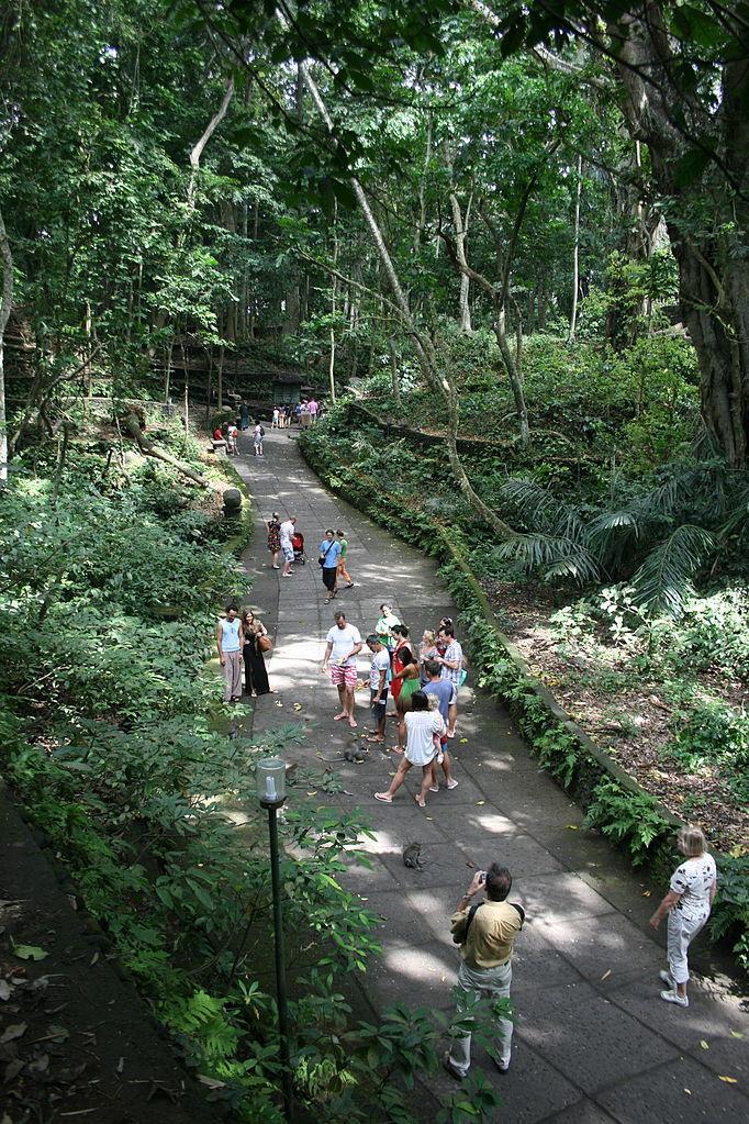 Ubud Village Bali Bird Park 1 Day Travel Itinerary Monkey