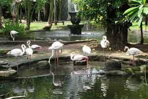 Wisata Alam Bali Tour Hutan Bird Park Kab Gianyar