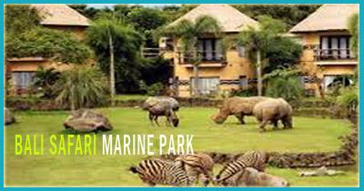 40 Tempat Wisata Alternatif Unik Bali Populer Safari Marine Park