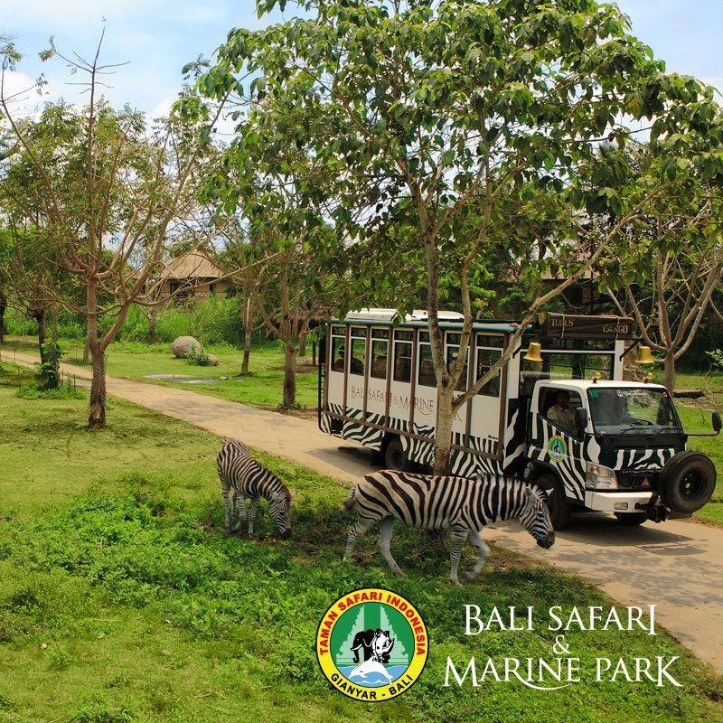 Htm Dago Dream Park Pinterest Bali Safari Marine Kab Gianyar
