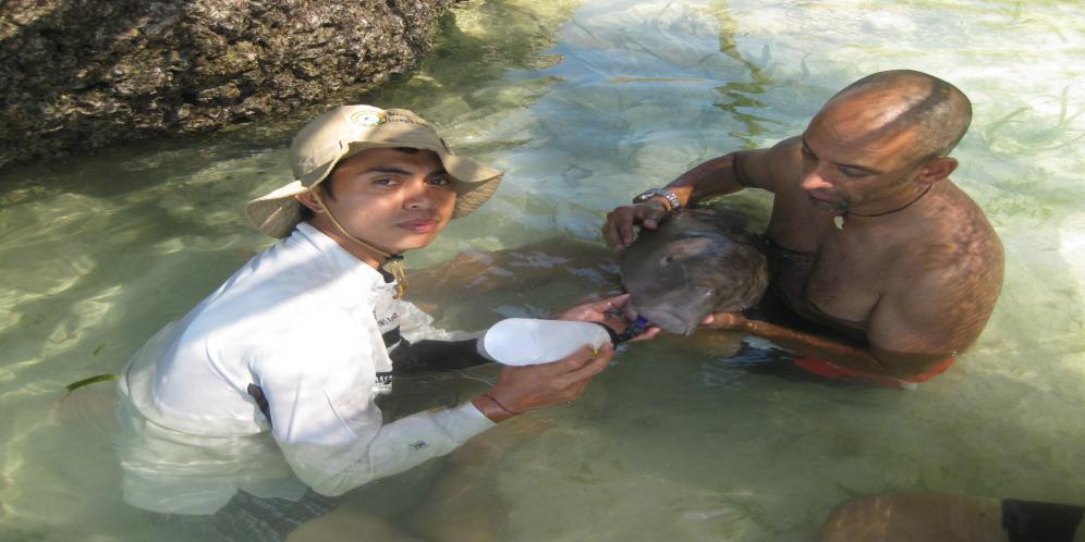 Penyelamatan Bayi Dugong Oleh Tim Bali Safari Beritabali Marine Park