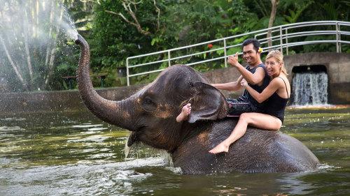 Rio Tour Bali Hire Car Driver Day Tours Elephant Park