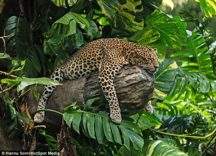 Safari Night Bali Christy Chung Nikmati Suasana Alam Liar Afrika