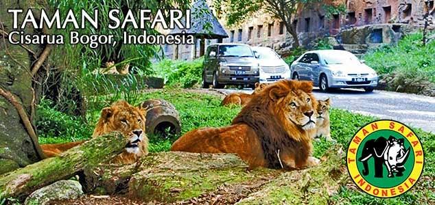 Taman Safari Indonesia Cisarua Bogor Tempat Wisata Terindah Gambar Lokasi